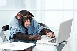 Monkey Albert