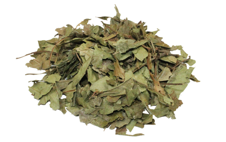 Psychotria Viridis (Chacruna)