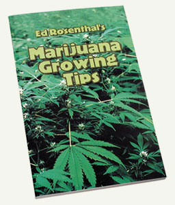 z Marijuana Growing Tips