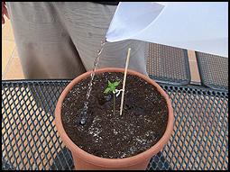 geeft het plantje nu water