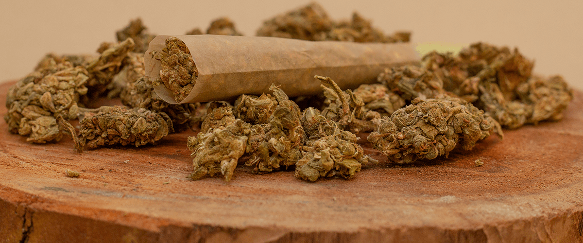 dried old cannabis