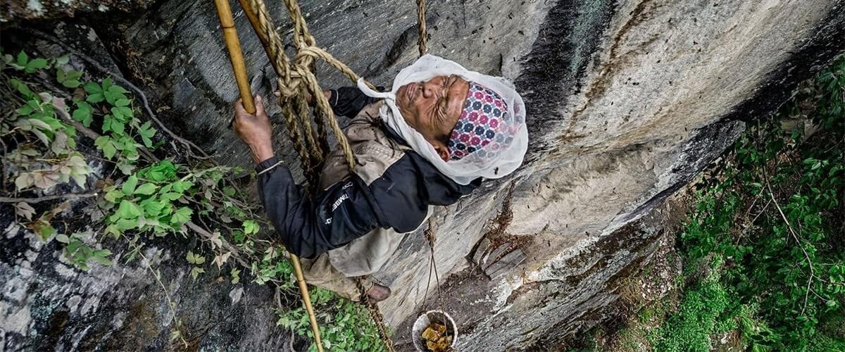 Mad Honey – the Himalayan hallucinogen