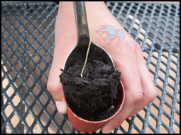 remove the plant carefully without harming the roots