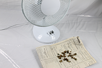 drying truffles with a fan