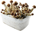 magic mushroom growkit
