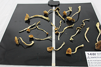 heatmat to dry magic mushrooms
