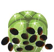 Peyote cacti seeds