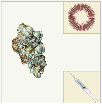 psilocybe tampanensis mycelium syringe