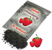 Salvia strawberry 5X extact