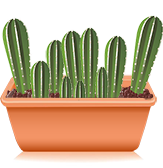 San Pedro cactus grow kit